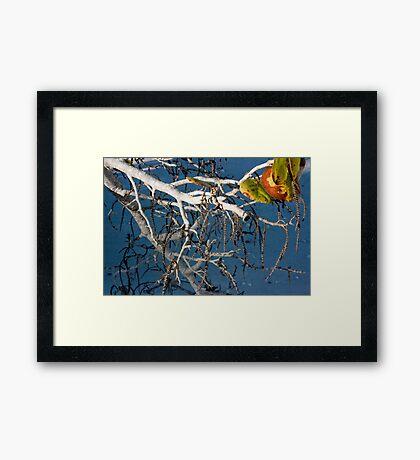 Sea Grapes, 1 Framed Print