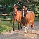 Cedar and Cameron - Ottawa, ON by Tracey  Dryka