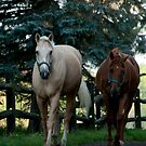 Strolling In  (Fitzroy and Nelson) Ottawa, ON by Tracey  Dryka