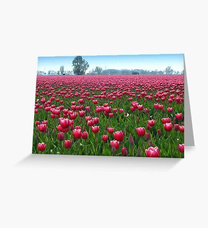 Beautiful Tulipfield Greeting Card