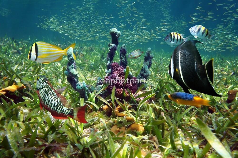 Colorful fish and marine life underwater by Dam - www.seaphotoart.com