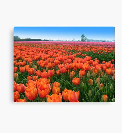 Tulipfields in Orange Canvas Print