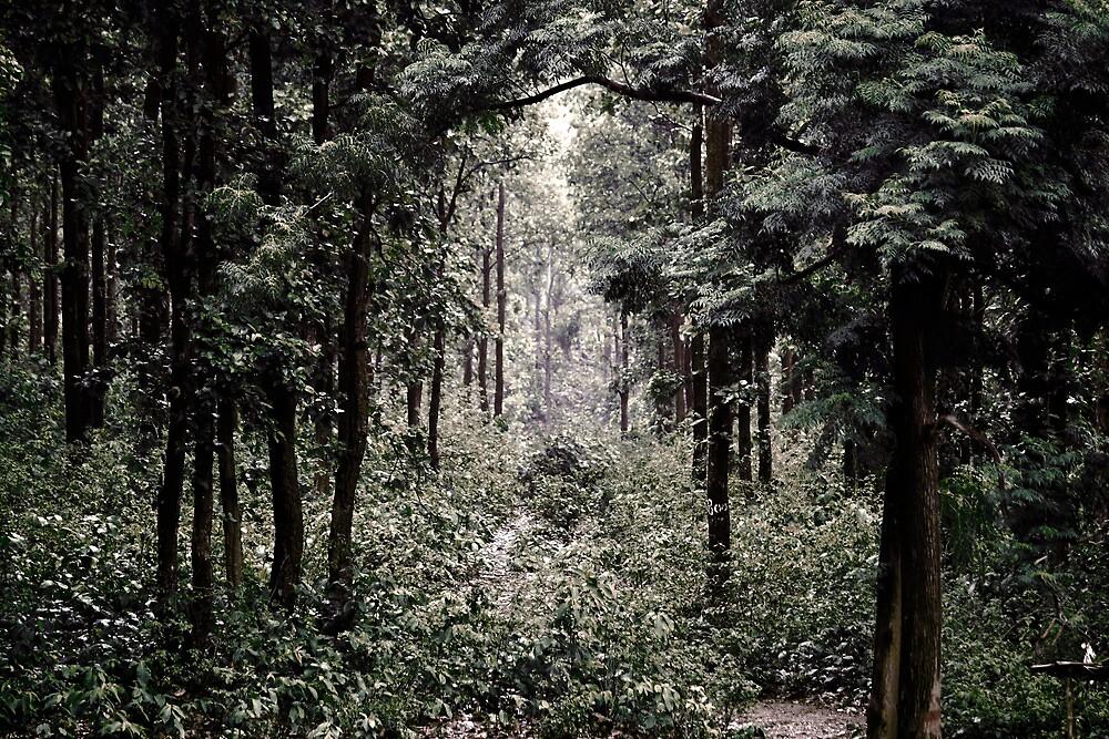 A secret path by rickvohra