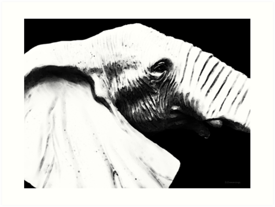 Black And White - Elephant Head Shot Art by Sharon Cummings