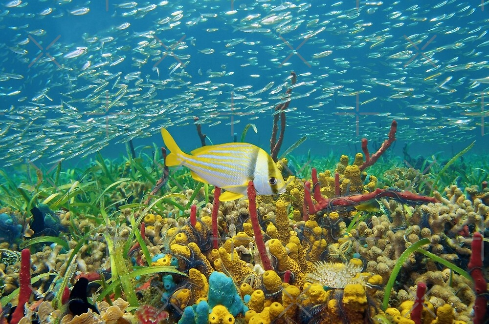 Colorful sea life underwater with shoal of fish by Dam - www.seaphotoart.com