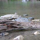 Einloggen River in Rain von Colleen Cornelius