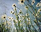 Distressed Wild Daisies by friendlydragon