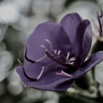 Rainy Day Tibouchina laxiflora by LyndaAnneArt