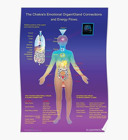 The Chakra's Emotional Organ/Gland Connections and Energy Flows Poster