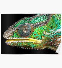 Panther chameleon Poster