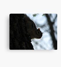 Furry Forest Friend Canvas Print