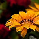 A colorful bokeh by Andrea Rapisarda