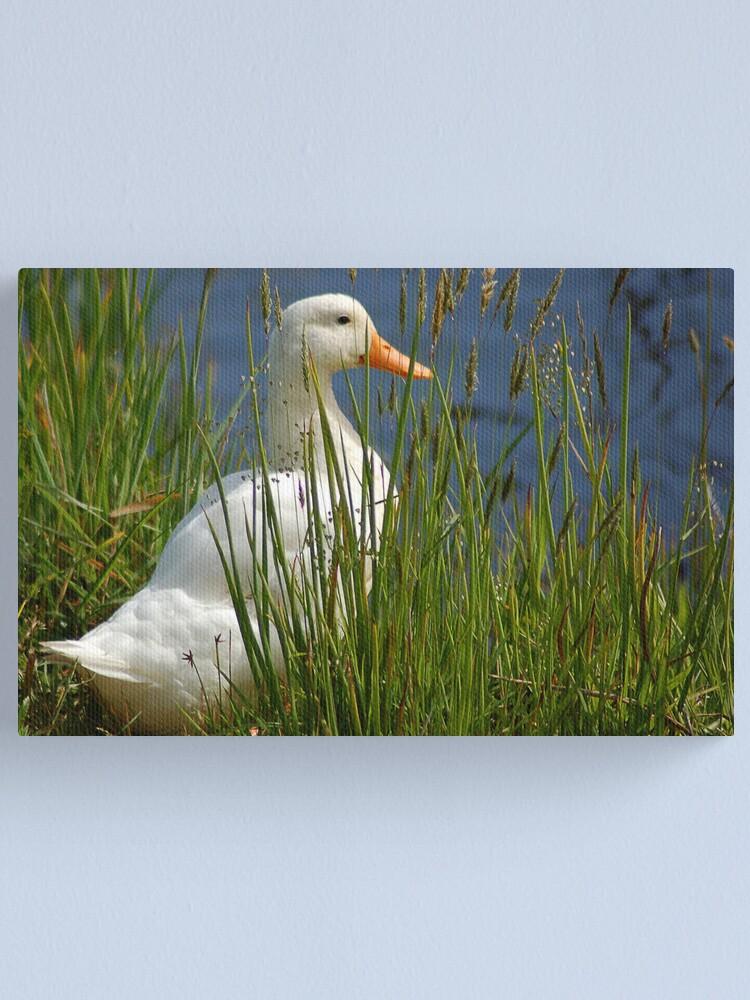 Alternate view of Pretty White Duck Canvas Print
