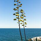 Giant Flora - Agave Bloom Spikes on a Seaside Terrace by Georgia Mizuleva