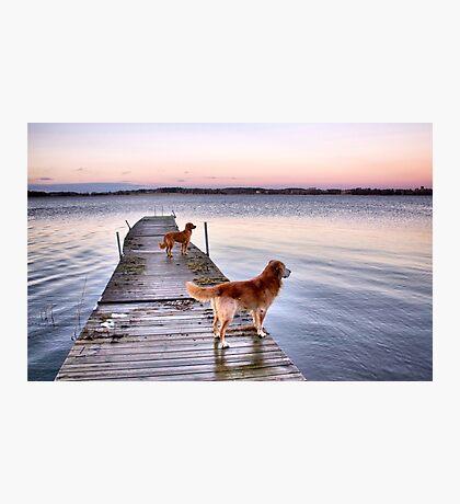 Sunset dogs Photographic Print