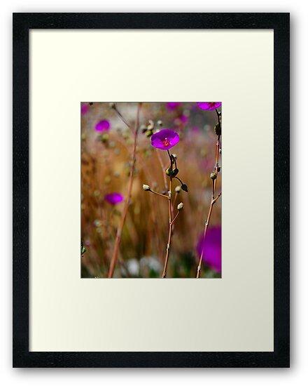 Purple Wild Flower Photo by CMMPhotography