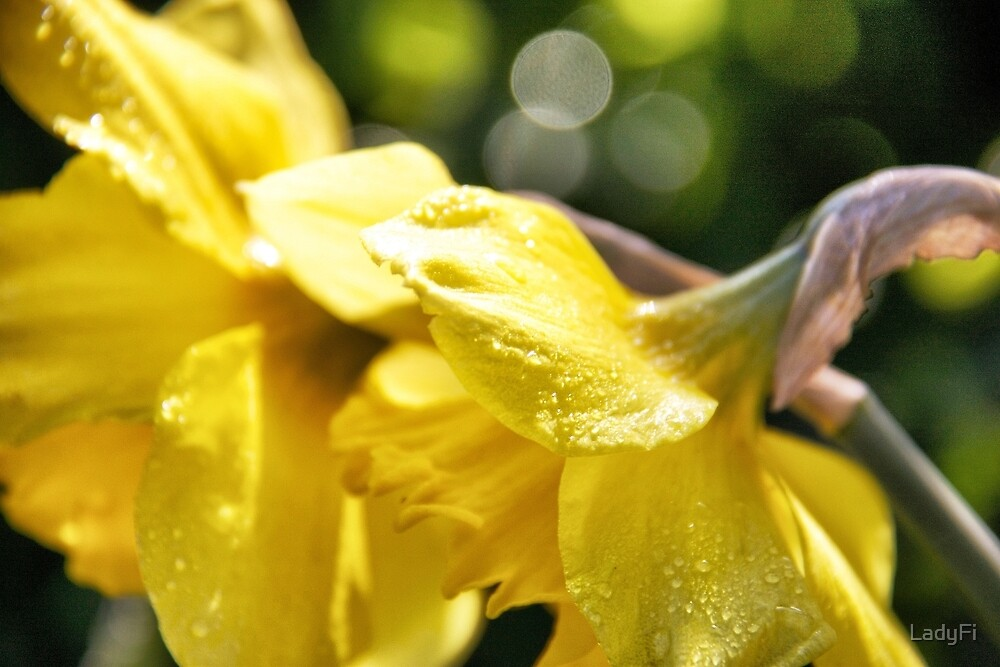 Sunny splash by LadyFi