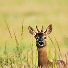 VEGAN Peace in Nature - Wildlife Photographer Original by VIDDAtees