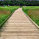 Boardwalk at McCormack's Beach Provincial Park by kenmo