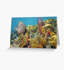 Colorful underwater life in a coral reef Greeting Card