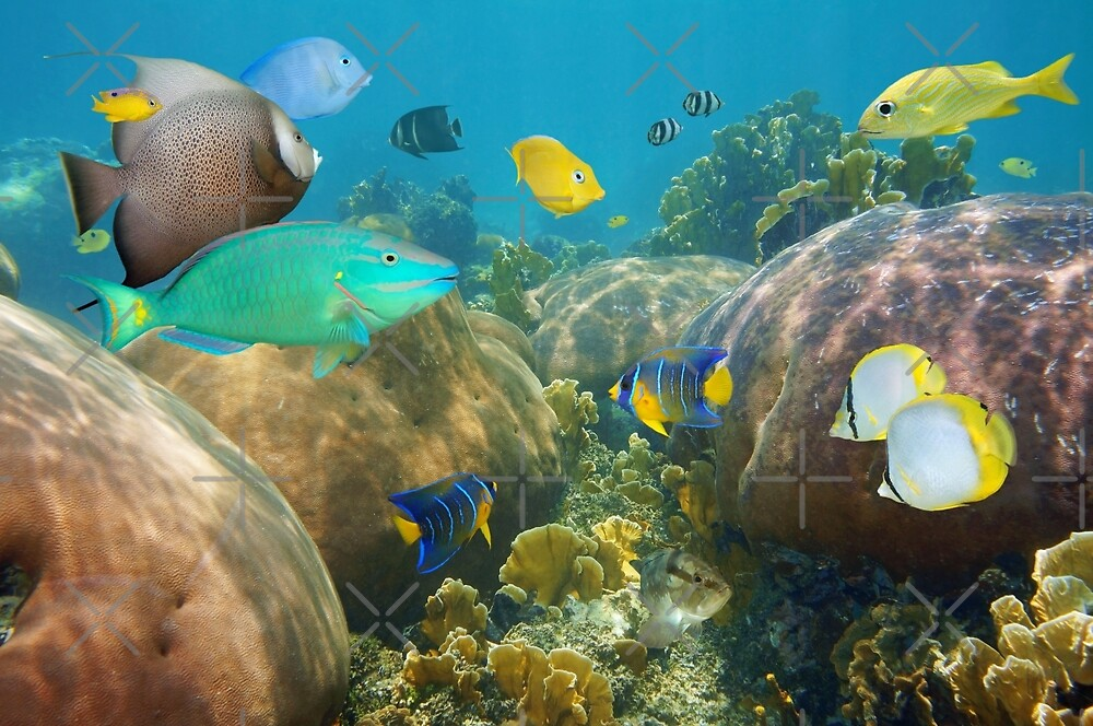 Colorful tropical fish in a coral reef by Dam - www.seaphotoart.com