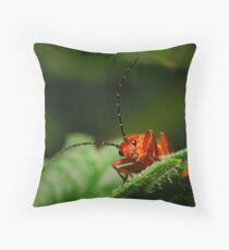 Rhagonycha fulva-Soldier Beetle Throw Pillow