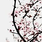 Spring blossom branches by by-jwp