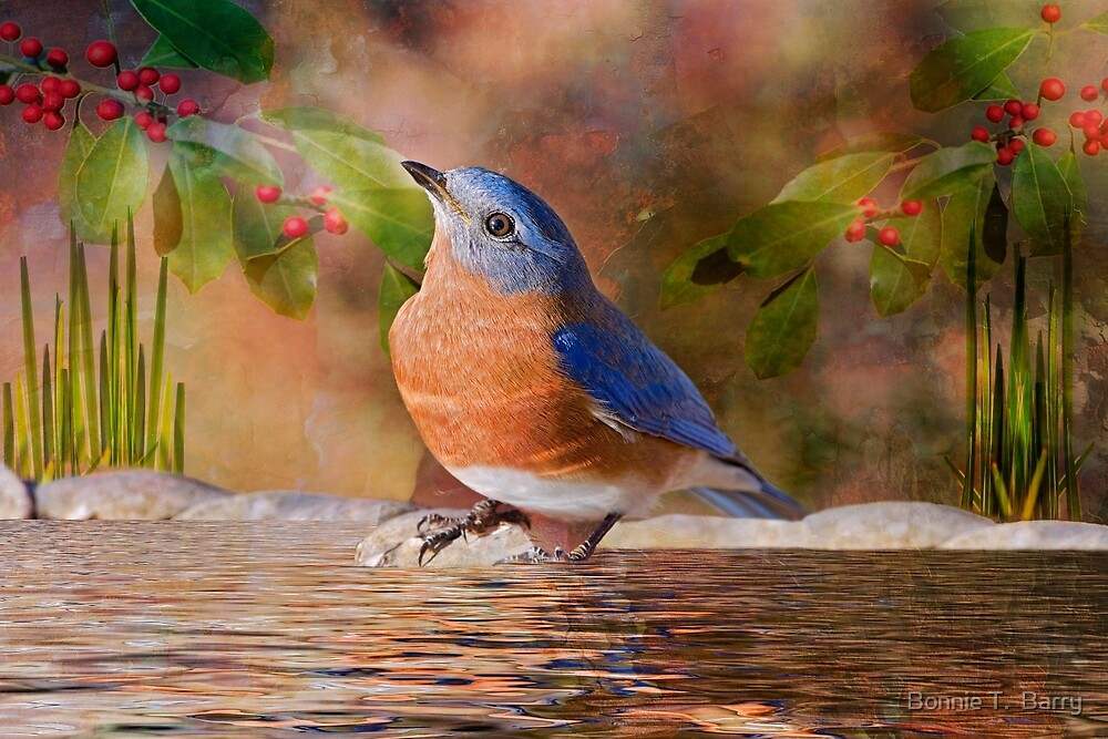 Sweet Little Bluebird by Bonnie T.  Barry