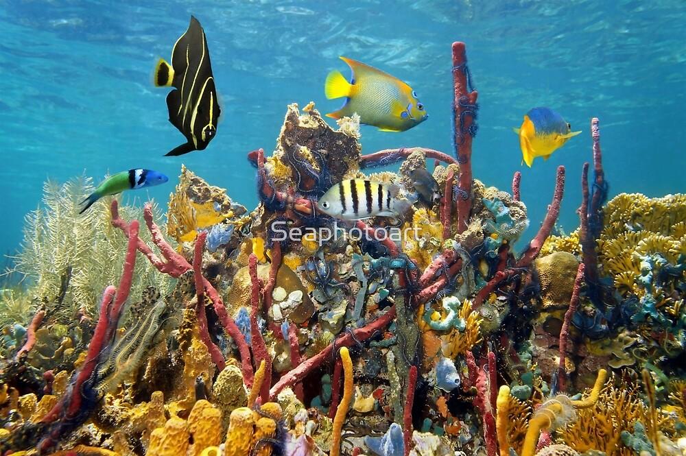 Coral reef underwater colors by Dam - www.seaphotoart.com