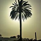 Sunny Palm by MarianaEwa