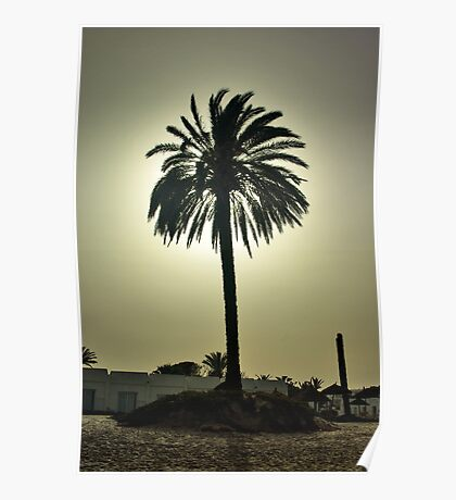 Sunny Palm Poster