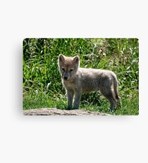 Just too darn Cute! Canvas Print
