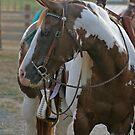 cowboy by bsilvermoon
