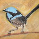 blue wren  by kellysp
