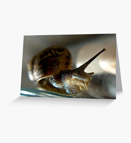 Snail #1 Greeting Card