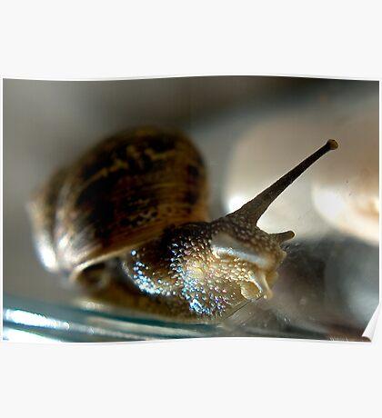 Snail #1 Poster