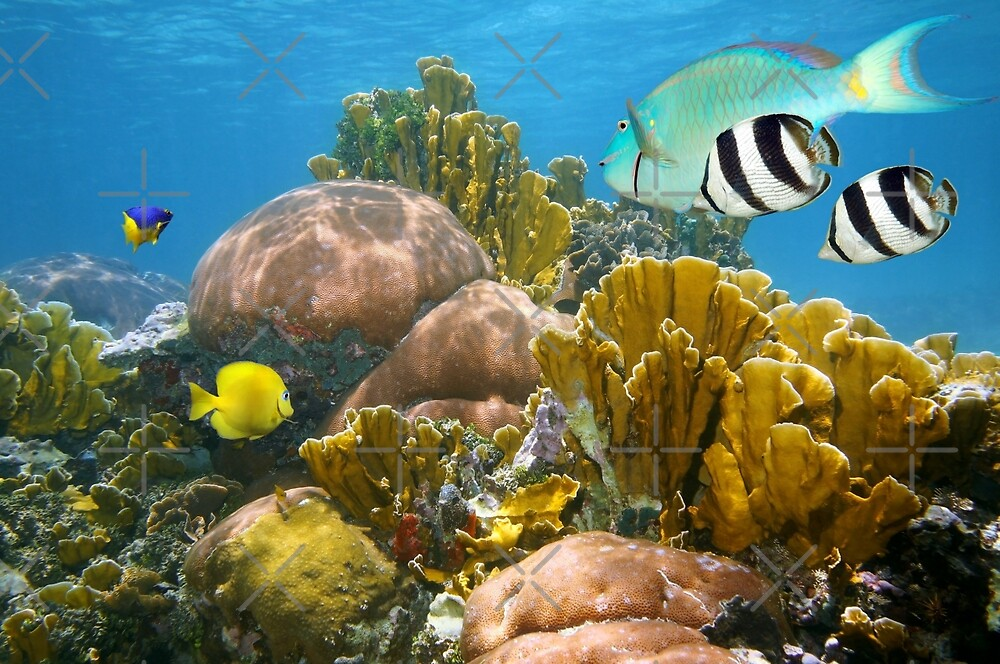 Healthy coral reef and colorful tropical fish by Dam - www.seaphotoart.com