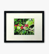 Shiney berries Framed Print