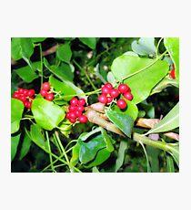 Shiney berries Photographic Print