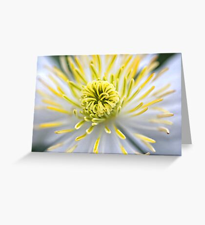 White Gold Greeting Card