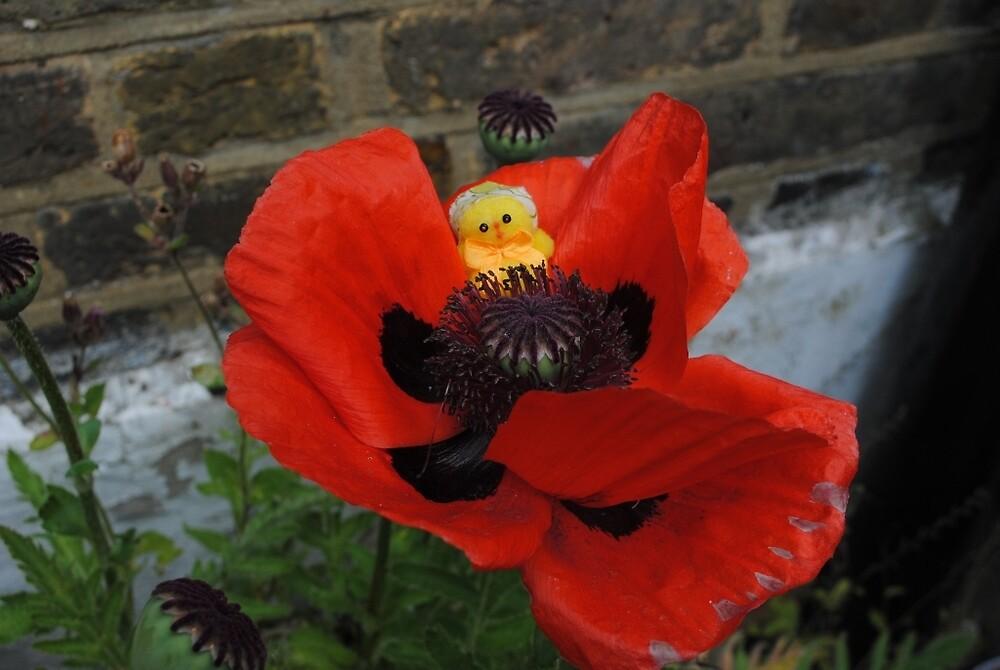 Chick in Poppy by Humperdink