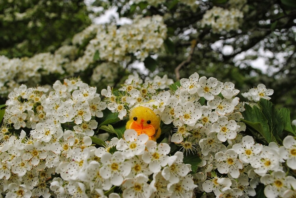 Chick on Blossom by Humperdink