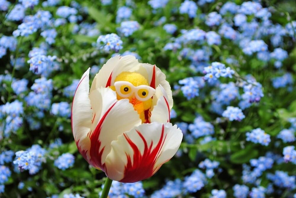 Chick in Tulip by Humperdink