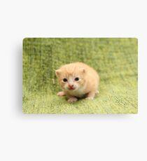Kitty cute Canvas Print