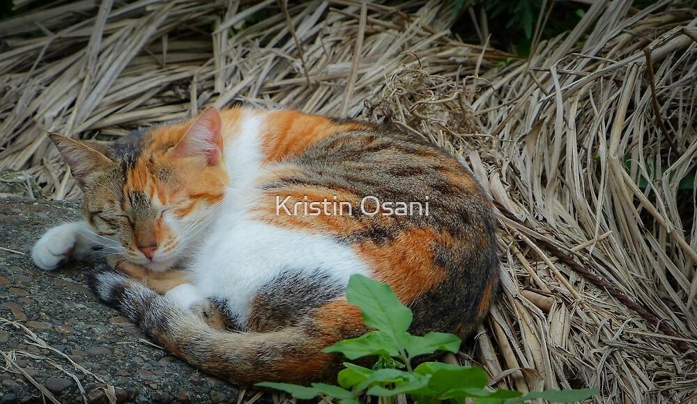 Cat Nap by Kristin Osani