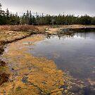 Coastal Hike by Sue  Cullumber