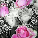 Pink rose pop by MandaP