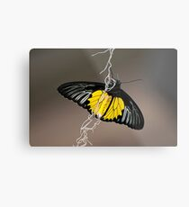 Hanging by a thread Metal Print