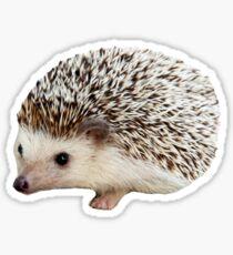 Carl the Hedgehog Sticker