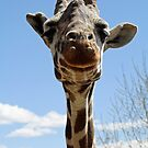 Giraffes by starbucksgirl26